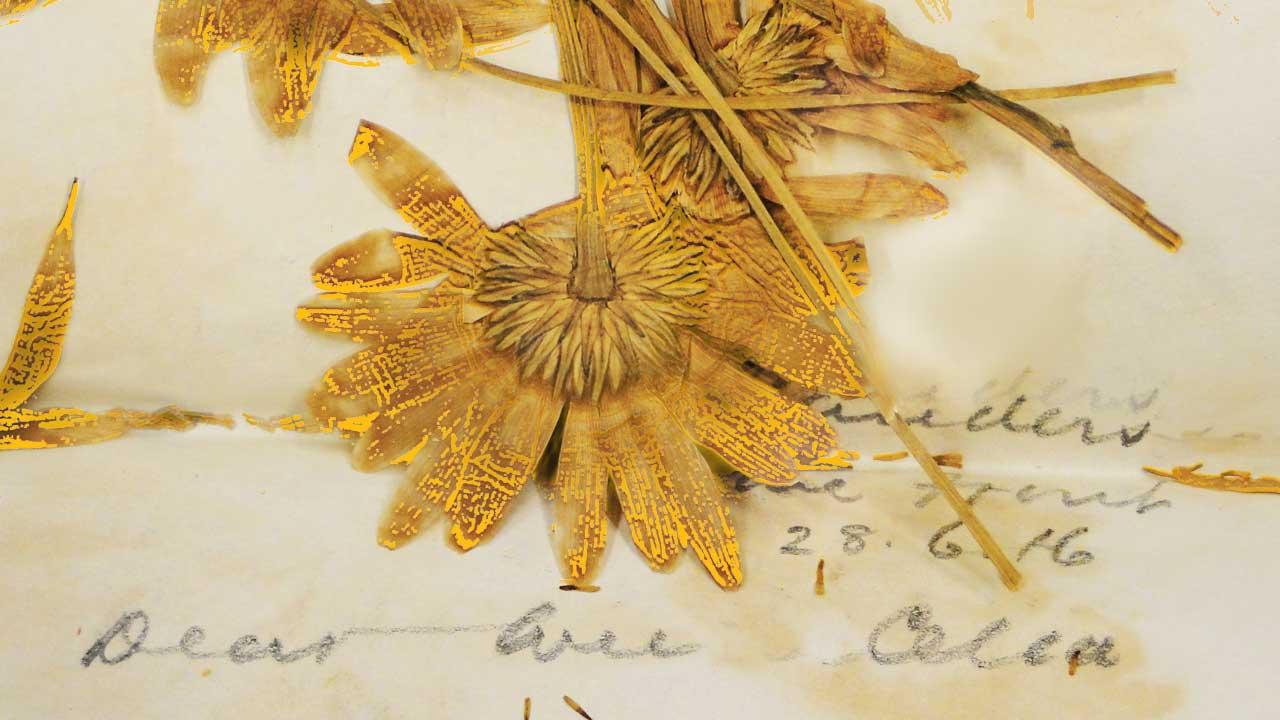 Background slider | Fleurs d'Armes - Une exposition artisitique itinérante | www.fleursdarmes.ca